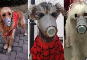 Dog face mask sales skyrocket in China amid coronavirus crisis