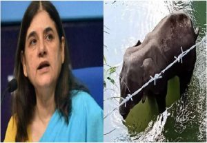 Kerala elephant death: Cong demands apology from Maneka Gandhi for comments against Malappuram