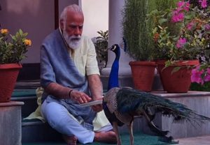 PM Modi feeds peacocks; shares video with nature on his Instagram