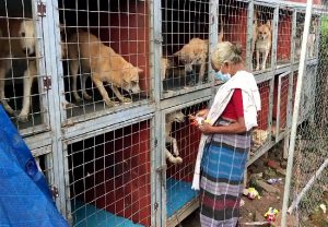 70-year-old woman in Kerala's Kottayam takes care of over 60 street dogs