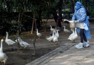 Bird flu outbreak confirmed in 10 states: Here's all you need to know