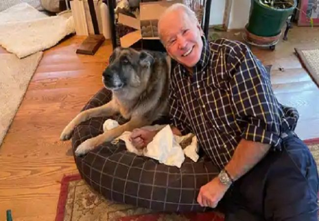 Joe Biden's dog Major welcomed to White House with 'Indoguration'