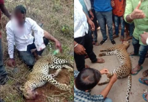 Karnataka: Leopard pounces on family returning home, man grabs him by neck and strangles to death (VIDEO)