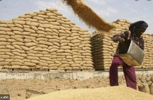 UP set to break its own record of highest wheat procurement, over 11.54 farmers benefitted so far