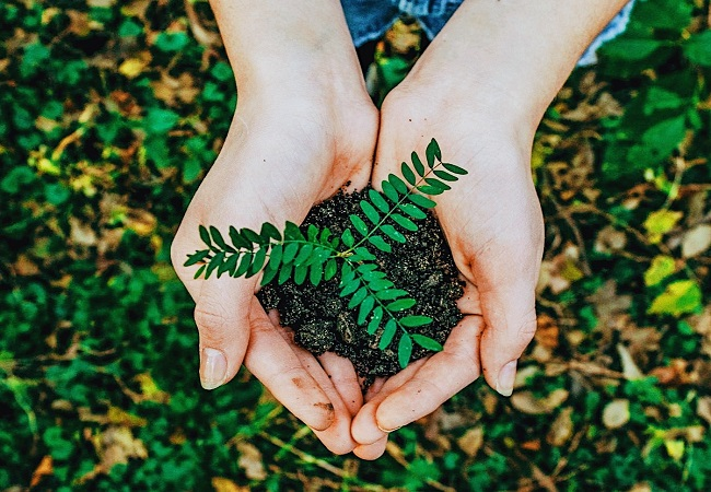 World Environment Day 2021: Theme, history, significance and quotes