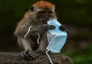 Explained: Will Monkey B virus lead to another catastrophe? China records 1st death