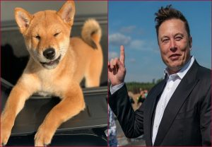Elon Musk backed Floki Inu turns Rs 1000 into Rs 34 lakh in just 2 months; Here's how